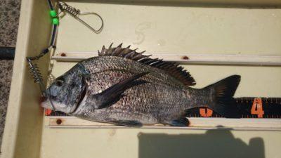 <p>旧一文字カーブ 紀州釣り チヌGET</p><p>久々の紀州釣りでの釣果です</p>