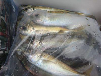 <p>沖の北 サビキで小アジ!早朝ポツポツと釣れたようです。</p>