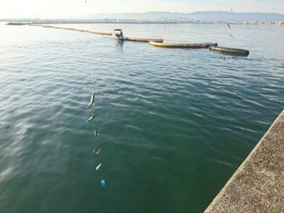 <p>沖の北リアルタイム(6:00) サビキで小サバが鈴なり♪今朝小アジは釣れてませんでした。</p>