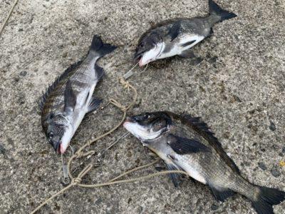 <p>沖の北内向き 落とし込みでチヌ3枚!餌はイガイです。</p>