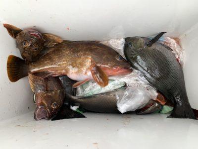 <p>旧一文字 赤灯 エビ巻きで30cm程のアコウとグレ・ガシラGET♪アコウのシーズンになってきましたね!アコウは高級魚なので狙ってみるのもありですよ♪</p>