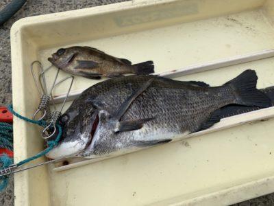 <p>沖の北 エビ撒きで43cmのチヌとメバル!おめでとうございます(^^)</p>