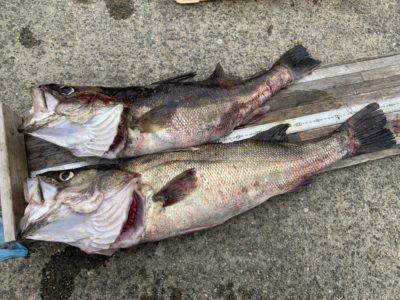 <p>沖の北 サバの切身を使ったズボ釣りで84cmまでのスズキを2尾GET!!!サビキでサバがよく釣れているので逃して弱ったサバを下で待ち構えてるかもしれないですね!おめでとうございます^ ^</p>