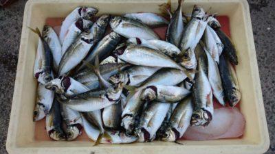 <p>津田様 沖の北 投げサビキ アジ多数GET</p><p>新しい群れが入ったようでアジ好調です。サバの群れをよけれれば数釣りできそうですね</p>