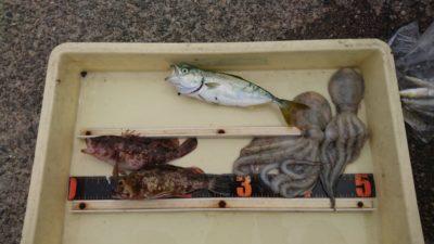 <p>沖の北 サビキとタコジグ タコともじゃことガシラGET</p><p>今タコが一番釣果があるので、タコだけ頑張ればもっと釣れますよ!</p>
