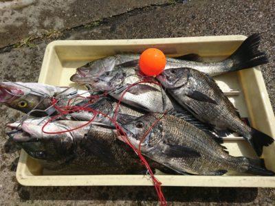 <p>沖の北 エビ撒き釣りでハネとチヌ大漁♪透け潮で厳しい状況ですがエビ撒きは安定してます。</p>