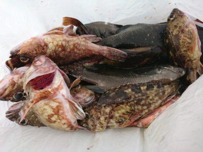 <p>川原様 沖の北 エビ撒き釣りで根魚いろいろ♪</p>