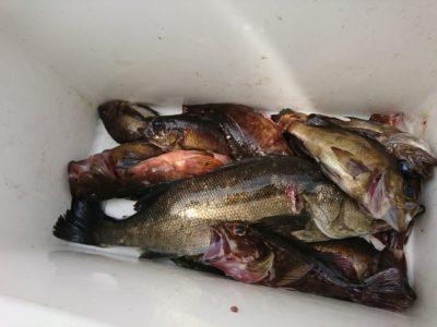 <p>沖の北 エビ撒き釣りでハネとメバルとガシラ!</p>