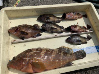 <p>田中様 沖の北 エビ撒きでアコウ41cmまでを2匹とガシラGET♪アコウの時期になってきましたね!高級魚おめでとうございます^ ^</p>