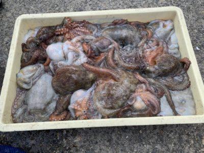 <p>田所様 沖の北 タコエギでタコ26杯!!流石の釣果ですね^ ^沖の北は根がかりが多いですが根があるところにはしっかりタコも付いている感じですね♪お見事です^ ^</p>
