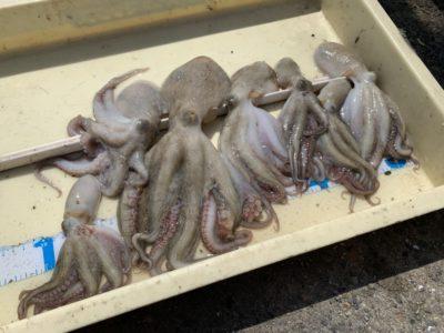 <p>さんじ君 沖の北 タコエギでタコ7杯♪タコ釣りはまだ始めたばかりですが上達が早い!お見事です♪</p>