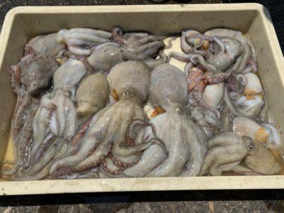 <p>田所様 沖の北 タコエギでの釣果です♪</p>