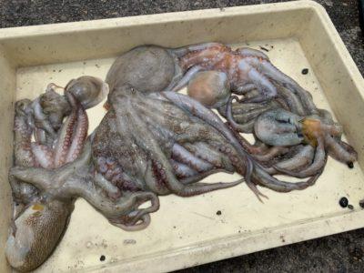 <p>沖の北 タコエギでの釣果です^ ^今日はタコジグの方がよく釣られていました!</p>