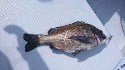<p>田中様 沖の北 落とし込み(イガイ)での釣果です♪今日は落とし込みは海が透けてたので渋かったみたいです!濁ればめっちゃ釣れますよ♪</p>