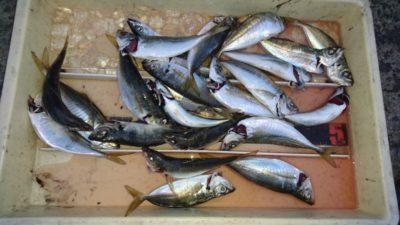 <p>津田様 沖の北 サビキ アジGET</p><p>アジの釣果は日によってかなりムラがあります</p>