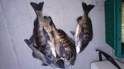 <p>熊取の田中様 沖の北 落とし込み 良型チヌGET</p><p>チヌも良く釣れてます(^^)/</p>