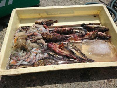 <p>沖の北 探り釣りでメバルとガシラ!タコも♪</p>