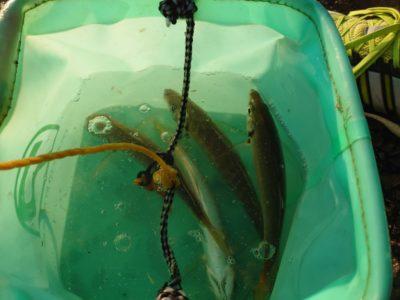 <p>沖の北リアルタイム(6:00)内向きサビキで小〜中アジとサバが釣れていました!外向きでジグサビキにも中アジ!ぼちぼちいるみたいでした♪</p>