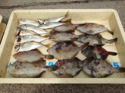 <p>沖の北 早朝にサビキで中アジとサバ!カワハギは外向きで胴つき仕掛け+アサリで釣れました♪</p>