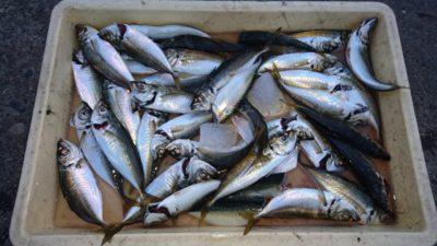 <p>津田様 沖の北 サビキ アジGET</p><p>今日は良く釣れたそうです(^^♪</p>
