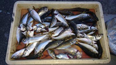 <p>津田様 沖の北 サビキ アジGET</p><p>小ぶりですがアジも釣れています(^^♪</p>