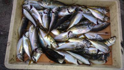 <p>津田様 沖の北 サビキ アジGET</p><p>名人はサバを避けて釣れてますね(^^♪</p>