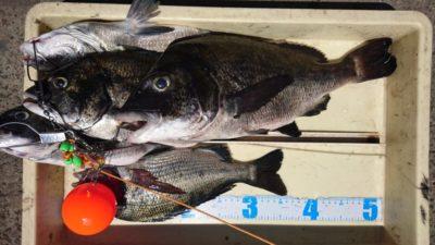 <p>沖の北 落とし込み チヌGET</p><p>チヌは良く釣れてますが、イガイの販売は終了しましたのでお気をつけください</p>