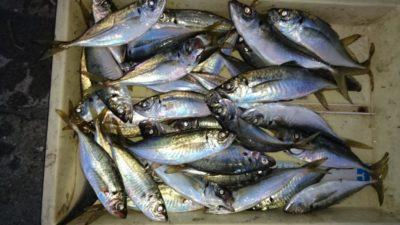<p>磯田様 沖の北 サビキ アジGET</p><p>沖の北低場での釣果です(^^♪</p>