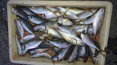<p>津田様 沖の北 サビキ アジGET</p><p>アジの釣果が上向きですね(^^♪</p>