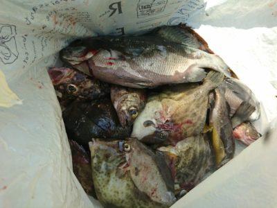 <p>川原様 沖の北 エビ撒き釣りで30㎝くらいのグレと根魚!そしてカワハギも♪胴つき仕掛けで狙うと面白そう♪</p>