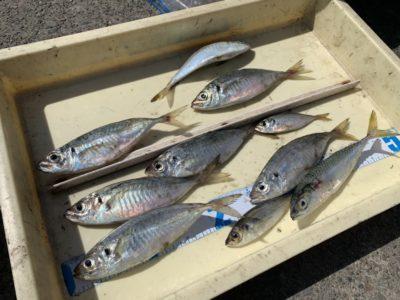 <p>沖の北 サビキ釣りで中アジと小鯖GET♪朝イチと夕方は20cm程のアジが回ってますね♪</p>