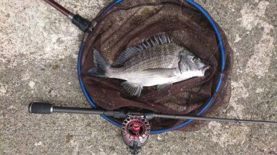 <p>マックススタッフ山中君 旧一文字赤灯 かかり釣りスタイルのダンゴ釣りでチヌ2枚!餌取り多いですがおもしろいです!</p>