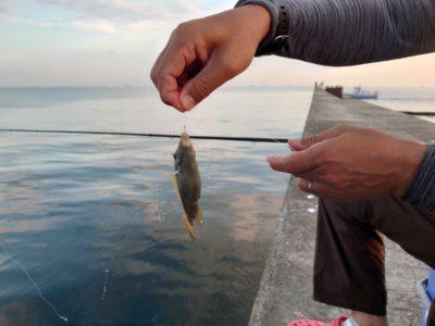 <p>沖の北 カワハギ 小さいのは釣れたようです。</p>