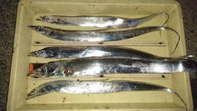 <p>沖の北 ジグ 太刀魚GET</p><p>やっと太刀魚回ってきたようですが、今年は小型ばかりのようです・・</p>