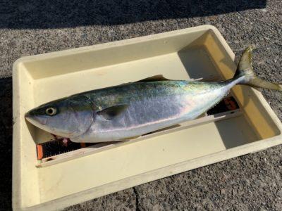 <p>松浦様 沖の北 のませ釣りでメジロ!今日は6時半頃まで小アジが良く釣れたみたいです!</p>