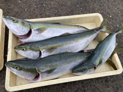 <p>山出様 沖の北 のませ釣りでハマチ〜メジロまでを4匹GET♪今日は朝小アジが良く釣れたそうです!朝イチ〜7時頃まではのませ用のアジが確保出来そうです!</p>