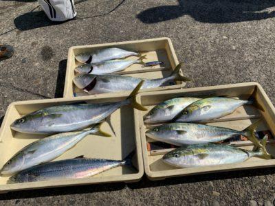 <p>マックススタッフ様 沖の北 のませ釣りとルアーでの釣果です♪ハマチサイズとサゴシはメタルジグで良く釣れたみたいです^ ^メジロはやはりのませ釣り強し!って感じでしたね(^o^)</p>