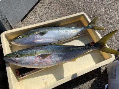 <p>川上様・平松様 沖の北 メタルジグでハマチ〜メジロGET♪太刀魚の釣果はほとんどありませんが青物は絶好調です!!!</p>