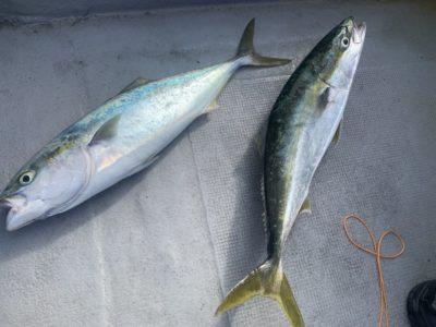 <p>宮林様 沖の北 のませ釣りでメジロ2匹^ ^</p>
