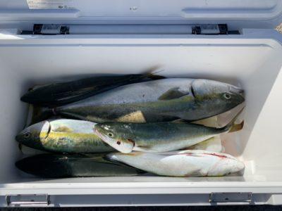 <p>秋田様 沖の北 メタルジグでの釣果です♪ハマチ〜メジロクラスまで釣れてました!</p>