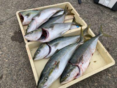 <p>ジョーイ様 沖の北 のませ釣りでメジロ7匹GET^ ^他にもメジロサイズ5匹釣れたみたいですがリリースされたそうです♪朝釣れた中アジをエサにされたみたいです!あたりも多く楽しめたとの事でした^ ^おめでとうございます(^o^)</p>