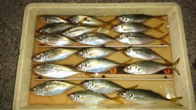 <p>白田様 沖の北 天秤仕掛け 中アジGET</p><p>オキアミを餌にして19:00頃でも釣れたようです(^^♪最大24cm!</p>
