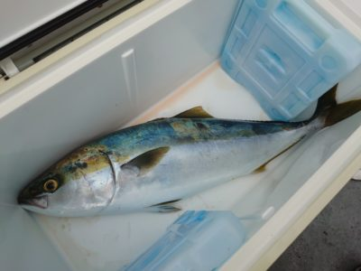 <p>沖の北 タニグチ様 飲ませ釣り初挑戦でメジロゲット!9時半頃。</p>