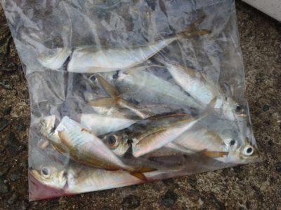 <p>沖の北 今朝も6時頃にサビキでアジがよく釣れてました♪7時にはとまっていたので、飲ませの方は朝沢山確保するようにしてくださいね。</p>