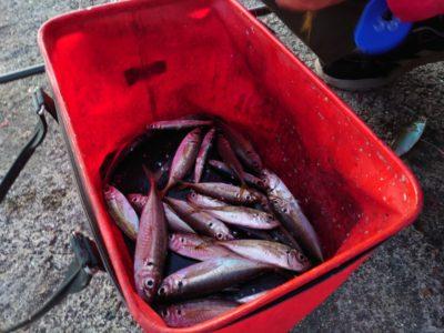 <p>沖の北 サビキでアジが釣れてました!6時頃まではよく釣れたようです。今日は中アジが少なめでした。飲ませにはちょうどいい感じのサイズ。7時以降はあまり釣れないので早朝に沢山確保するようにしてください。</p>