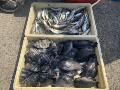 <p>井沢様 沖の北 ヌカ切りでグレ・サンバソウ・中アジ・サバ・ウルメイワシ大量GET♪沖の北の魚影は凄いですね!おめでとう(^o^)</p>