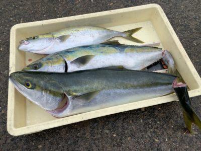 <p>山出様 沖の北 のませ釣りでハマチ〜メジロまでを3匹!!今日は朝イチ渡ってサビキでのませ用の小アジが良く釣れたみたいです♪山出様、今日も流石の釣果です!おめでとうございます(^o^)</p>