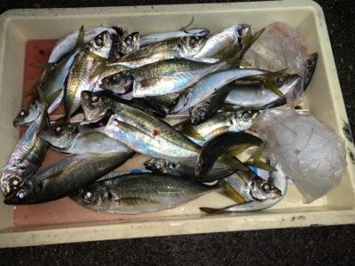 <p>津田名人様 沖の北 飛ばしサビキで16時頃から30cmまでのアジ多数GET♪竿下でも釣れてましたが15〜20m程投げた方が良型が釣れてました!</p>