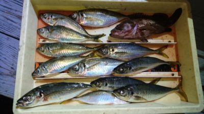 <p>磯田様 沖の北 サビキ 中アジGET</p><p>今日は沖の北の外向きで16:00から釣れたようです(^^♪サイズも30cmまであります</p>