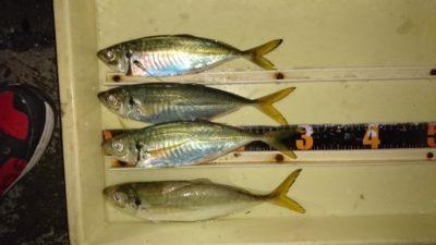 <p>白田様 沖の北 天秤仕掛け アジ~31cmまでGET</p><p>エサはオキアミで釣れたそうです(^^♪</p>